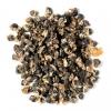 Pallatrax Hidra Black Snail