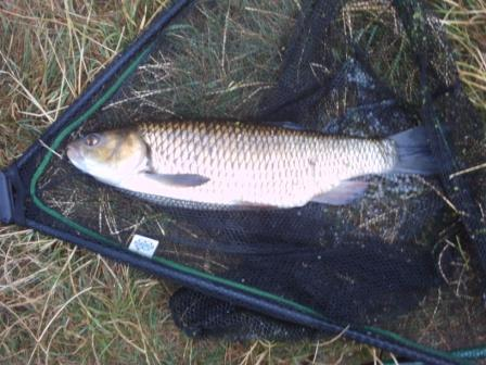 A nice 5lb 2oz chub landed by Andy Clarke