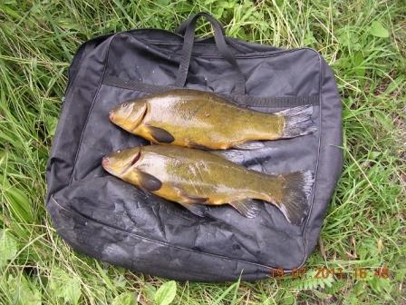 Dave Webleys and a nice brace of Throop tench
