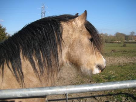 Elvis the horse and gate