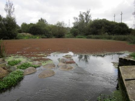 Throop Mill Pool