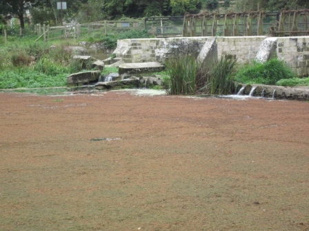 Throop Mill Pool from a different angle