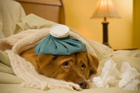 Brian feeling as sick as a dog!!
