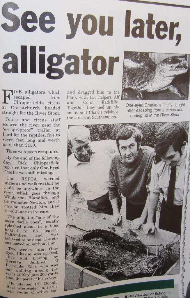Throop-Alligator-large