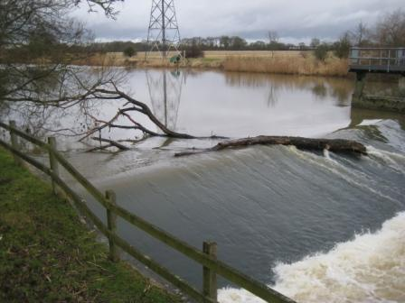 Brian's photo of the tree stuck in the weir. What you can't see is the enormous great dane that is swimming out to retrieve it!