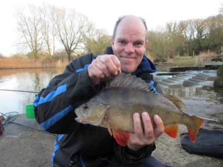 Dave Webley with a fantastic looking 3lb perch