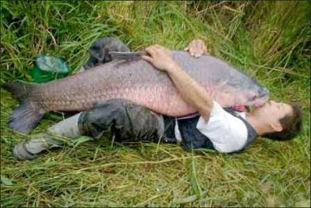 fish love in