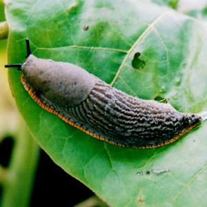 Beware of slugs with a taste for PVA!
