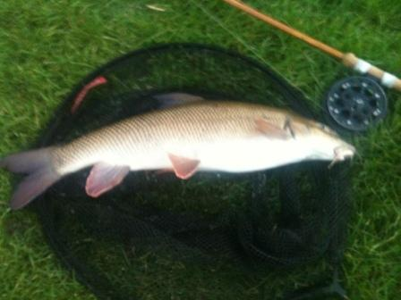 Basher caught 7lb 4oz