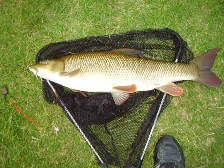 Craigs best barbel of the session weighing 8lb 5oz.