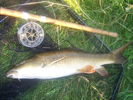 A first for Deano - a barbel on the pin.