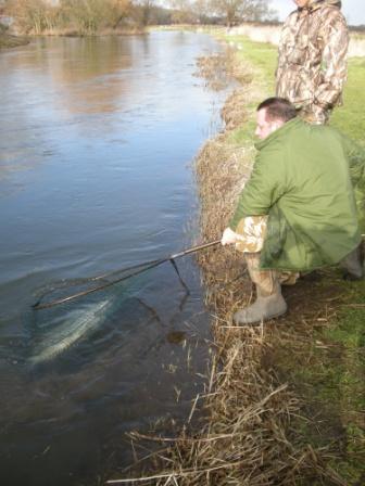 River Keeper John Dennis prepares to return the salmon
