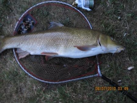 Martin Kirkpatrick's 13lb 4oz barbel was unfortunately landed when no-one was available to take a picture.
