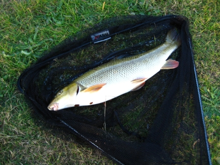 Simon Lee's 10b 7oz barbel