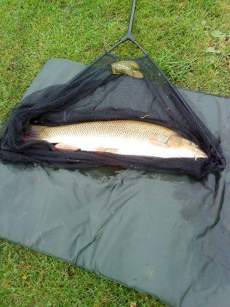 A barbel of around 7lb 8oz caught by Stafford Read